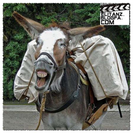 عکس های خنده دار و دیدنی سری 36|Elitanz.blogfa.com